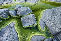 Pattern of rock and algae in L&aring;ngvikssk&auml;r.<br /> Stockholm Archipelago, Sweden
