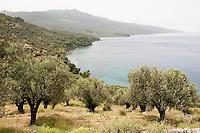 Olive groves on the slopes near Korakas Lighthouse, Lesbos Island, Greece
