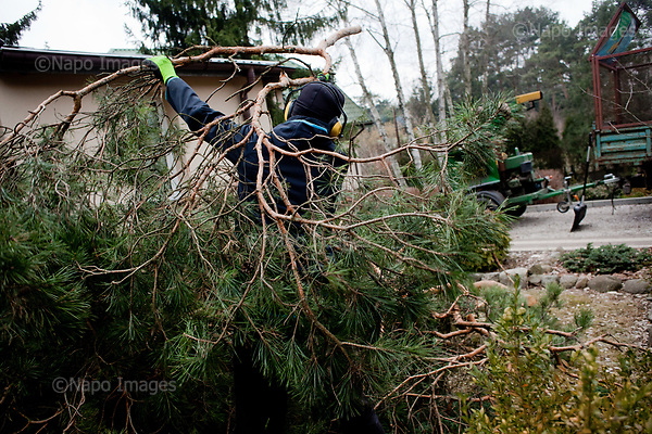 OTWOCK, POLAND, 15/03/2017:<br /> Tomasz is picking up parts of the tree in a small town of Otwock near Warsaw, March 15, 2017. The new controversial law has allowed to cut the trees that were previously banned and there's been a sure in cutting trees all over the country. <br /> (Photo by Piotr Malecki / Napo Images)<br /> ****<br /> OTWOCK,  15/03/2017:<br /> Wycinka dwoch drzew na prywatnej dzialce w Otwocku po wprowadzeniu przez ministra srodowiska Jana Szyszke prawa o swobodym wycinaniu drzew.Fot: Piotr Malecki / Napo Images