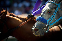 April 7, 2012. Creative Cause finishes 2nd to I'll Have Another in the Santa Anita Derby(GI) at Santa Anita Park in Arcadia, CA.