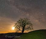 Milky Way, Coastal Live Oak, Quercus agrifolia, Los Padres National Forest, Big Sur, Monterey County, California