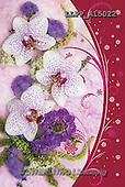 Maira, FLOWERS, BLUMEN, FLORES, photos+++++,LLPPA15022,#F#