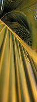 Iles Bahamas /Ile d'Andros/South Andros: détail des palmiers de la plage de 'Eco-Lodge-Tiamo Resort