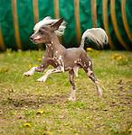 Guides Canins Samedi_at 10-1:00