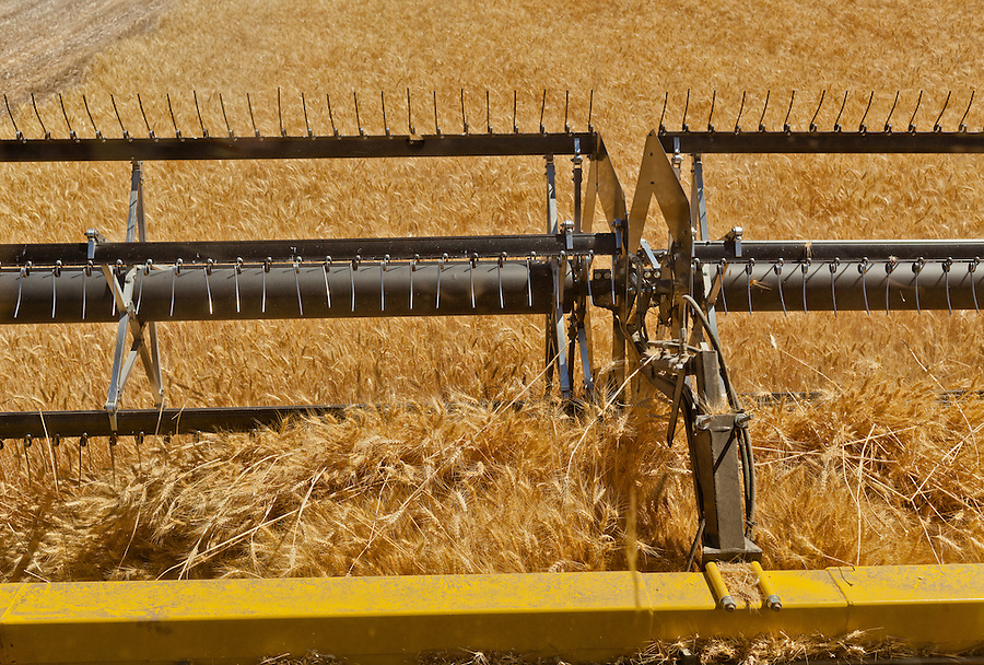 View from the cab of a Case 8120 combine as it harvests wheat in the Palouse of Eastern Washington State.