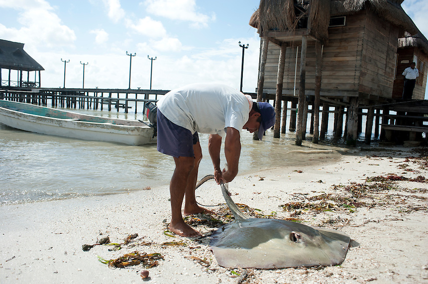 A fisherman with a freshly fished stingray. Isla Aguada, Campeche, Mexico