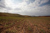 33Sem Peixe_MG, Brasil...Plantacao de cana-de-acucar em Sem Peixe, Minas Gerais...Plantation of sugarcane in Sem Peixe, Minas Gerais...Foto: LEO DRUMOND / NITRO