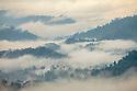 Mist rising off lowland dipterocarp forest, Danum Valley, Sabah, Borneo, Malaysia.