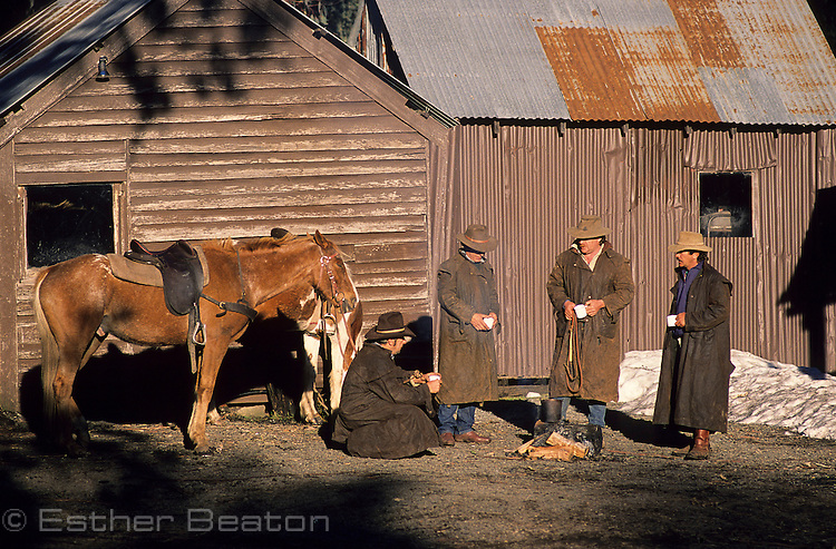 "Stockmen gathering at High Country hut for early morning ""smoko"" (coffee/tea). Snowy Mountains, near Mt Buller, Victoria"