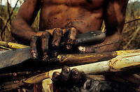 Detail of sugarcane worker´s hands in the field, ethanol production, Amazon region, Brazil.