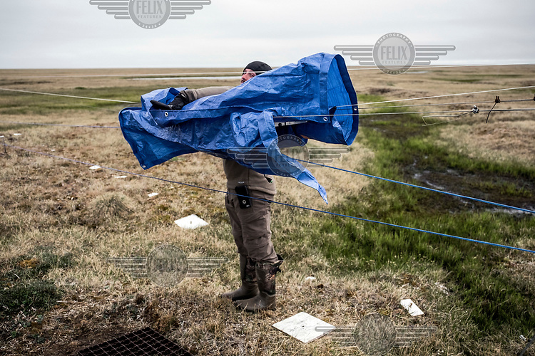 Jacob Harris, 23, a botanist and a guest researcher at the Barrow Arctic Research Center and Barrow Environmental Observatory covers a measuring device, installed on the tundra, with a piece of tarpaulin.