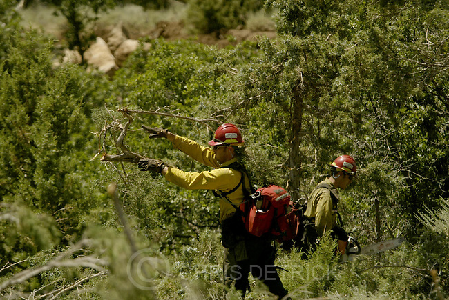 South of New Harmony, UT--27 Jun 2005--.Larry Kazakoff, of the Rogue Ridge Hot Shots out of Oregon, work to cut down and clear trees on the Blue Ridge fire line..**Pictures from the Blue Ridge fire to the west of I-15 and South of New Harmony.**.Chris Detrick /Salt Lake Tribune.File #816G5666