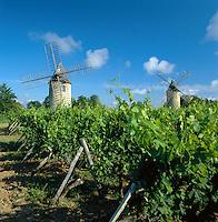 France, Aquitaine, St. Emilion: Vineyard & Windmills | Frankreich, Aquitanien, St. Emilion: Windmuehle und Weinberg