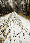 Snowy path with footsteps leading in to the forest on the St. Vrain Greenway trail in Longmont, Colorado