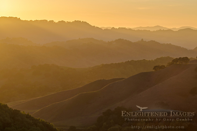 Sunset light over rolling hills, Briones Regional Park, Contra Costa County, California