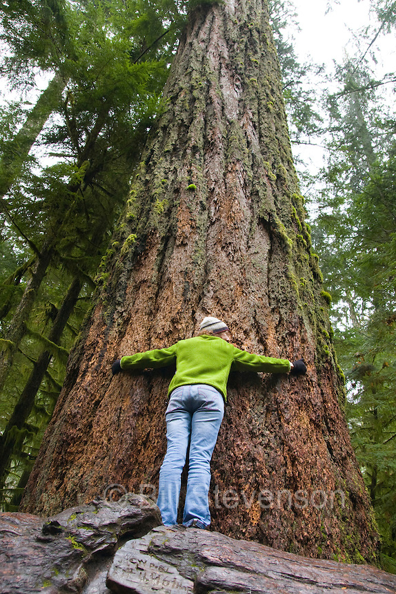 A photo of a woman hugging an old growth tree in a rainforest on Vancouver Island in British Columbia in Canada