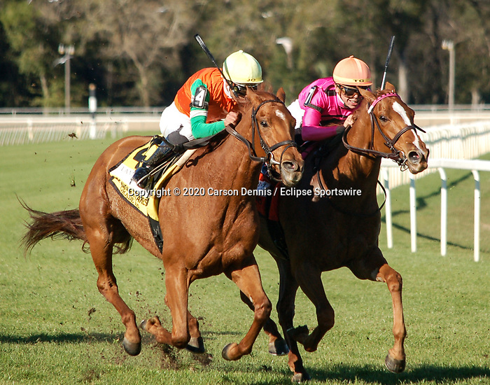 February 8, 2020: #4, GOT STORMY, and Jockey Tyler Gaffalione could not make up enough ground in the stretch for the Grade III Lambholm South Endeavour Stakes at Tampa Bay Downs during Sam F. Davis Stakes Day on February 8, 2020 in Tampa, FL. (Photo by Carson Dennis/Eclipse Sportswire/CSM)