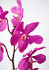 An orchid at the Ritz-Carlton Kapalua on Maui, Hawaii. Photo by Kevin J. Miyazaki/Redux