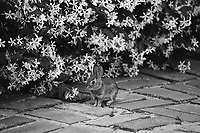 Baby Bunny in my yard., 2019  Film
