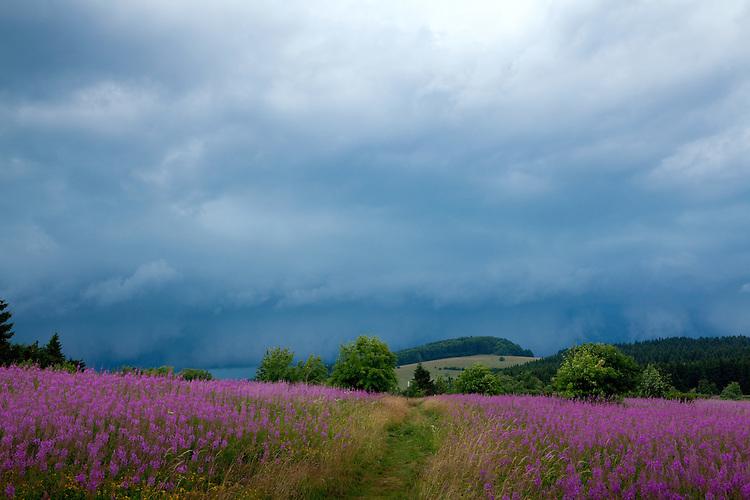 Europa, DEU, Deutschland, Bayern, Rhoen, Oberelsbach, Naturschutzgebiet Lange Rhoen, Unwetter, Regenwolken, Bluehende Weidenroeschen, Epilobium angustifolium, Chamaenerion angustifolium, Das Schmalblaettrige Weidenroeschen (Epilobium angustifolium oder Chamaenerion angustifolium) ist eine Pflanzenart aus der Familie der Nachtkerzengewaechse (Onagraceae). Es wird auch als Stauden-Feuerkraut, Waldweidenroeschen oder Waldschlagweidenroeschen bezeichnet., Kategorien und Themen, Natur, Umwelt, Landschaft, Jahreszeiten, Stimmungen, Landschaftsfotografie, Landschaften, Landschaftsphoto, Landschaftsphotographie, Wetter, Himmel, Wolken, Wolkenkunde, Wetterbeobachtung, Wetterelemente, Wetterlage, Wetterkunde, Witterung, Witterungsbedingungen, Wettererscheinungen, Meteorologie, Bauernregeln, Wettervorhersage, Wolkenfotografie, Wetterphaenomene, Wolkenklassifikation, Wolkenbilder, Wolkenfoto<br /> <br /> [Fuer die Nutzung gelten die jeweils gueltigen Allgemeinen Liefer-und Geschaeftsbedingungen. Nutzung nur gegen Verwendungsmeldung und Nachweis. Download der AGB unter http://www.image-box.com oder werden auf Anfrage zugesendet. Freigabe ist vorher erforderlich. Jede Nutzung des Fotos ist honorarpflichtig gemaess derzeit gueltiger MFM Liste - Kontakt, Uwe Schmid-Fotografie, Duisburg, Tel. (+49).2065.677997, ..archiv@image-box.com, www.image-box.com]