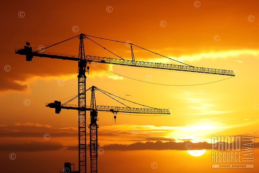 Cranes in paradise, silhouetted against the sunset.