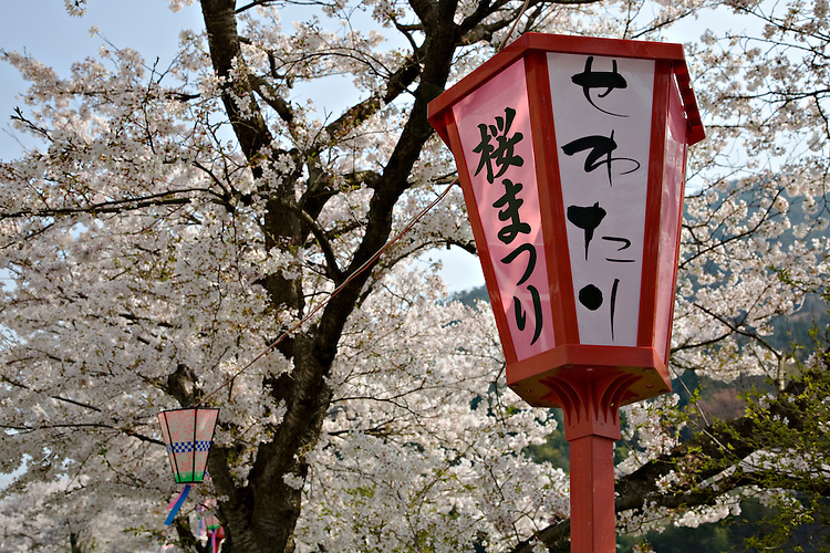 Close-up of traditional Cherry Blossom Festival lanterns with cherry blossoms in background near Takeda Japan