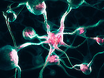 Neurons, Nervous system, Brain cells 3D illustration