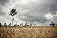 peloton plowing through the cornfields of Northren France under a threatening sky<br /> <br /> 2014 Tour de France<br /> stage 4: Le Touquet-Paris-Plage/Lille M&eacute;tropole (163km)