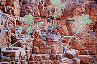 Image Ref: CA552<br />