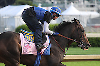 May 1, 2014: Ria Antonia gallops in preparation for the Kentucky Oaks at Churchill Downs in Louisville, KY. Zoe Metz/ESW/CSM
