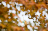 The green dome of Eliot House is seen above the so-called River Houses, dorms for upperclassmen undergraduate students at Harvard, across the Charles River at Harvard University in Cambridge, Massachusetts, USA, on Mon., Oct 15, 2018.