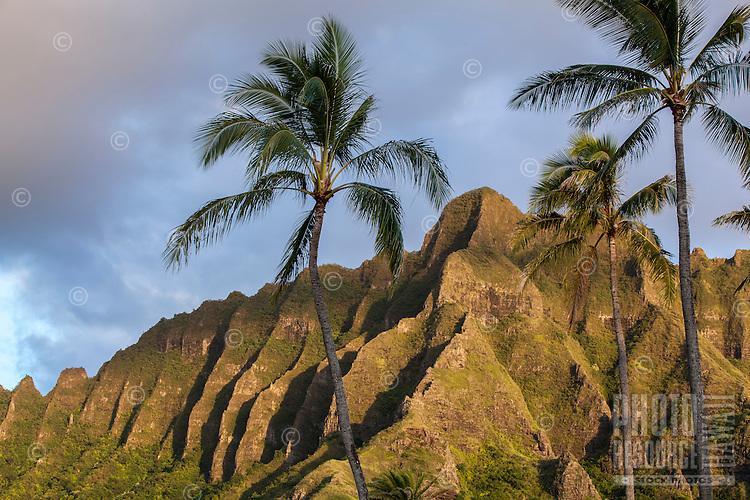 The Ko'olau Mountain Range provides a majestic backdrop to a trio of coconut palm trees near Kualoa Ranch, O'ahu.