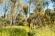 Image Ref: CA732<br />