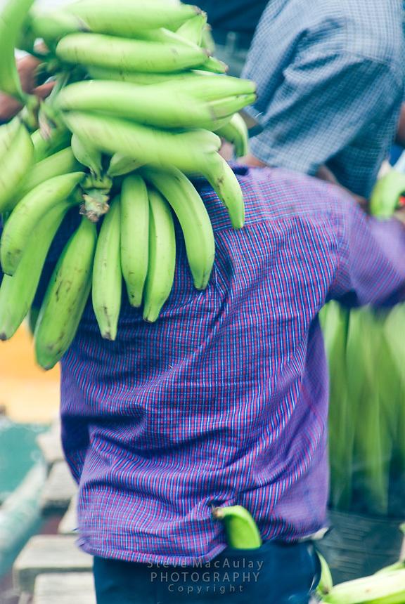 Unloading bananas, Bocas Del Toro, Panama