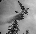 September 4, 1987 Greeley Hill, California -- Stanislaus Complex Fire  -- Aerial Tanker drops retardant on fire near Greeley Hill.  The Stanislaus Complex Fire consumed 28 structures and 145,980 acres.  One US Forest Service firefighter, David Ross Erickson, died from a tree-felling accident.