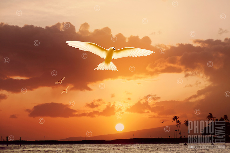 Birds soaring over ocean at sunset against a backdrop of the Waianae Mountains.