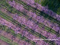 63801-11815 Peach orchard in spring-aerial  Marion Co. IL