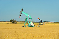 Oil pump jacks and wheat field<br /> Carlyle<br /> Saskatchewan<br /> Canada
