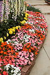 DISPLAY OF IMPATIENS, AFRICAN MARIGOLD, AND FOXGLOVE BY GOLDSMITH SEEDS