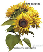 Marcello, FLOWERS, BLUMEN, FLORES,sunflowers, paintings+++++,ITMCEDF1073,#F# ,everyday