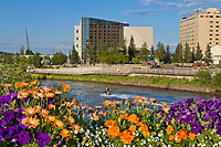 Flowers flourish under the endless daylight of Fairbanks summers, overlooking the Chena River, Rabinowitz courthouse and Golden Heart Plaza in downtown, Fairbanks, Alaska.