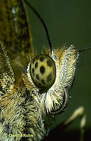 LE25-002a  Butterfly - close-up of eye Great Spangled Fritillary - Speyeria cybele