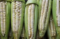 Amérique/Amérique du Sud/Pérou/Lima : Marché de Surquillo - Maïs blanc