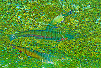 """PSYCHOTROPIC TROUT""<br />