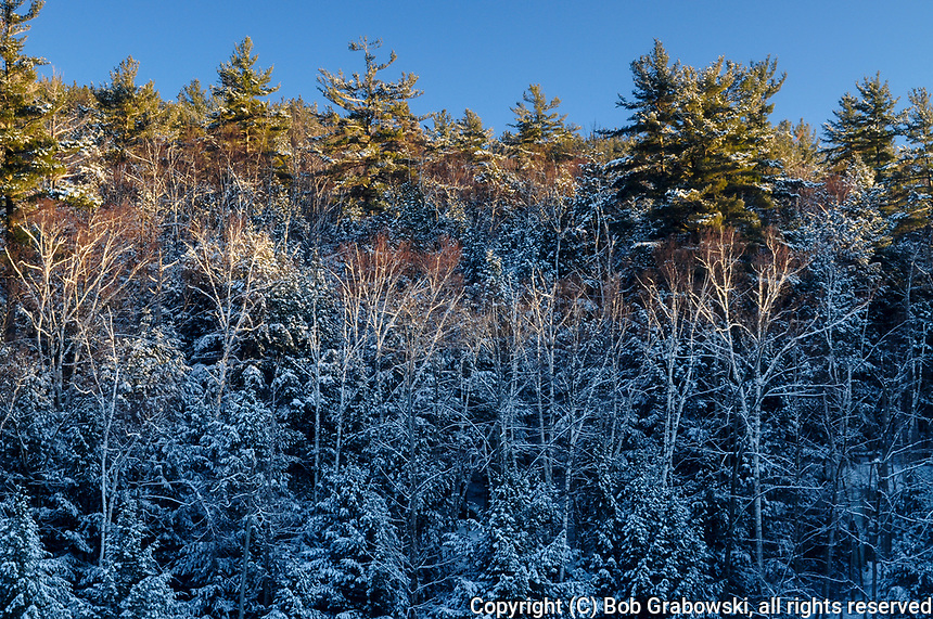 Snow Covered Trees In The Adirondack Mountains Of New York State