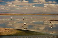 Atacama desert, Chile Atacama desert, Chile