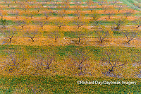 63801-12120 Peach orchard in fall-aerial  Marion Co. IL