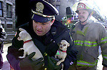 Holyoke Mass Police officer David Usher grasps 2 little Chihuahua's  as he runs from a burning building in Holyoke  Saturday afternoon, the multi alarm fire in the large apartment block took hours to bring under control and required the assistance of several area towns while leaving as many as a 125 people homeless, in all 6 chihuahua's were rescued from an apt on 3rd floor just moments before the fire consumed the floor,  no one was hurt in the blaze.  A Jim Michaud pic 2/3/01