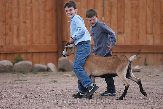 Westcliffe - . Monday, July 28, 2008. boys with goat