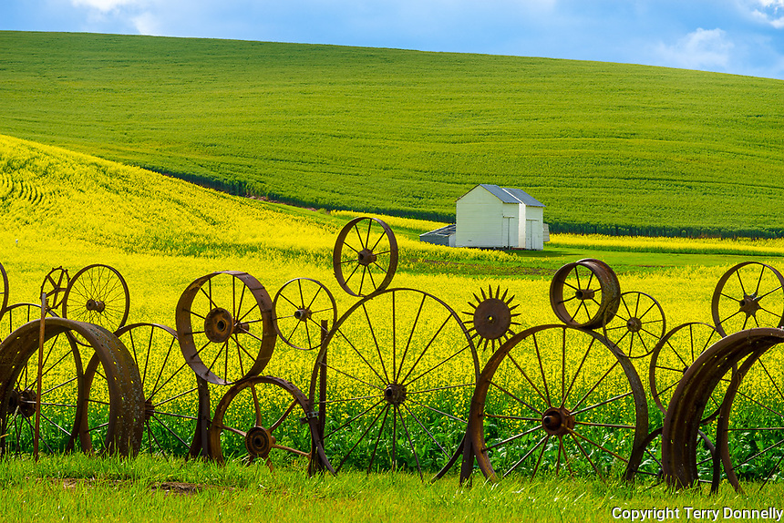 Whitman County, WA      <br /> Antique wheel fence and yellow fields of canola near Uniontown